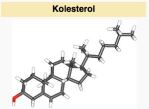 Kolesterol wiki