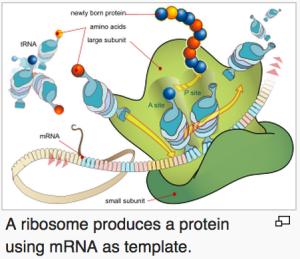 Proteinuppbyggnad