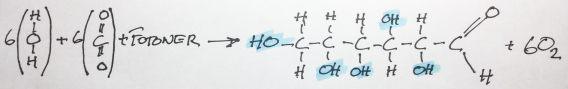 Koldioxidfixerande fotosyntes