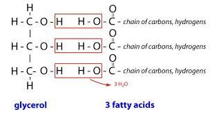 Glycerol - fettsyror