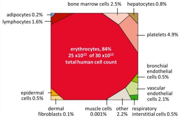 Kroppens celler