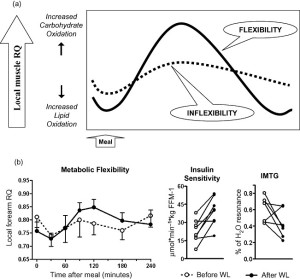 Figure-1-Metabolic-flexibility-and-metabolic-inflexibility-model-for-postabsorptive-and