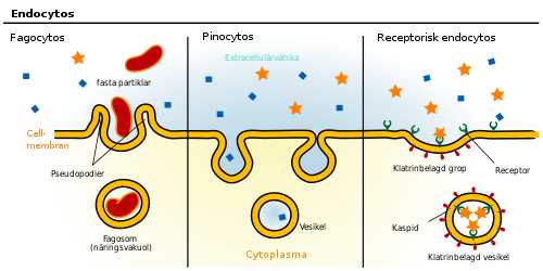 vad är en cell i biologiska sammanhang